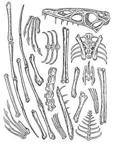 Lessen Skelet Woord Amp Beeldclub